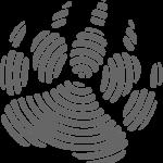 Logotipo B.E.A.R. FORENSICS
